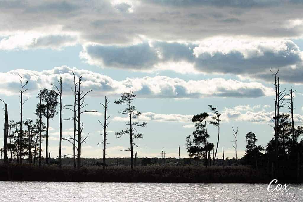 Landscape blackwater wildlife refuge